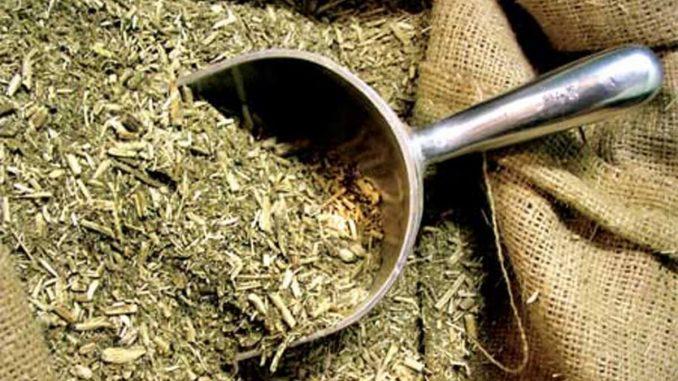 Propiedades Medicinales de la Yerba Mate