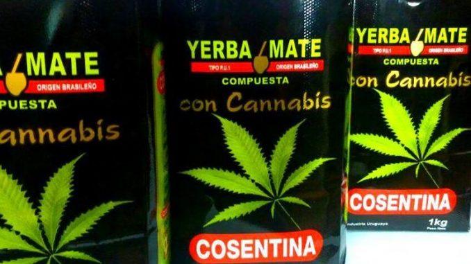 Uruguay: comercialización de yerba con cannabis
