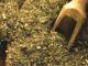 hierbas para combinar con el mate