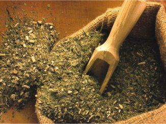 Propiedades medicinales y alimenticias de la yerba mate